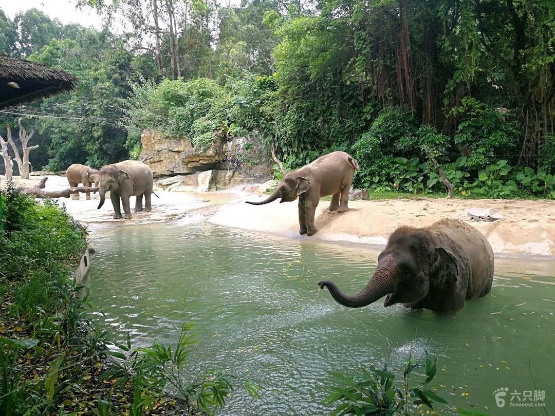 长隆动物园未命名