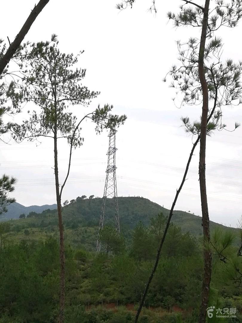 南雄香草世界森林公园电塔图片