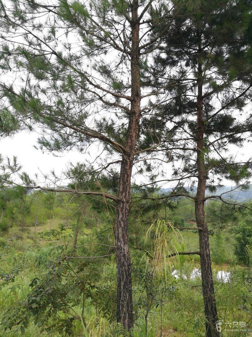 南雄香草世界森林公园图片