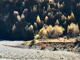 305省道比如到边坝的途中小景。