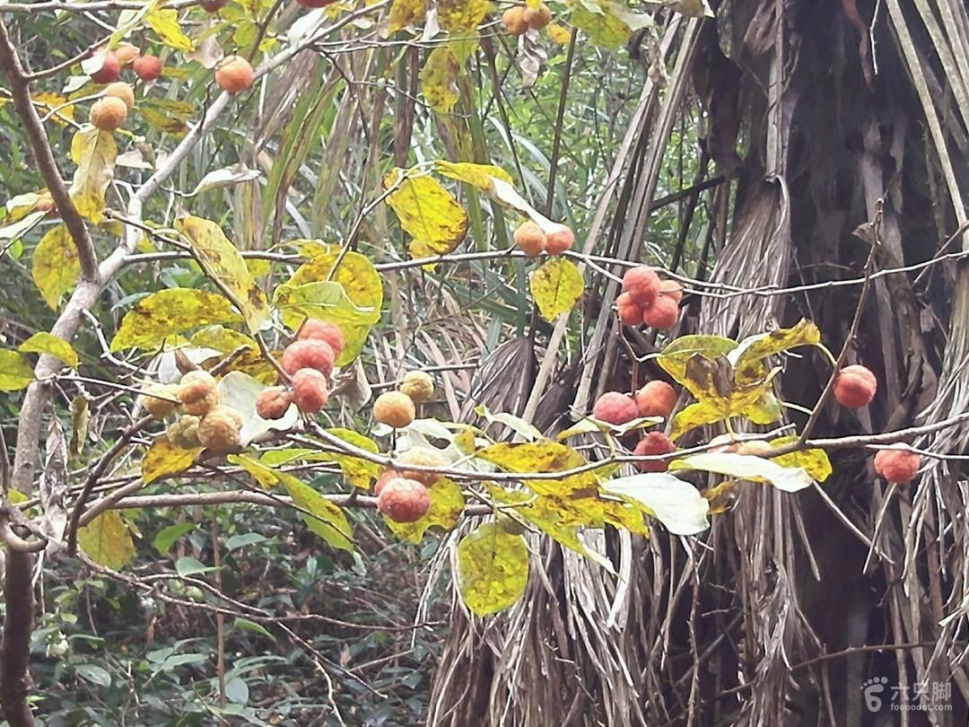 171105茅镬-柿林(丹山鄞州)战地2_脚印_赤水区游戏环线2通关攻略图片