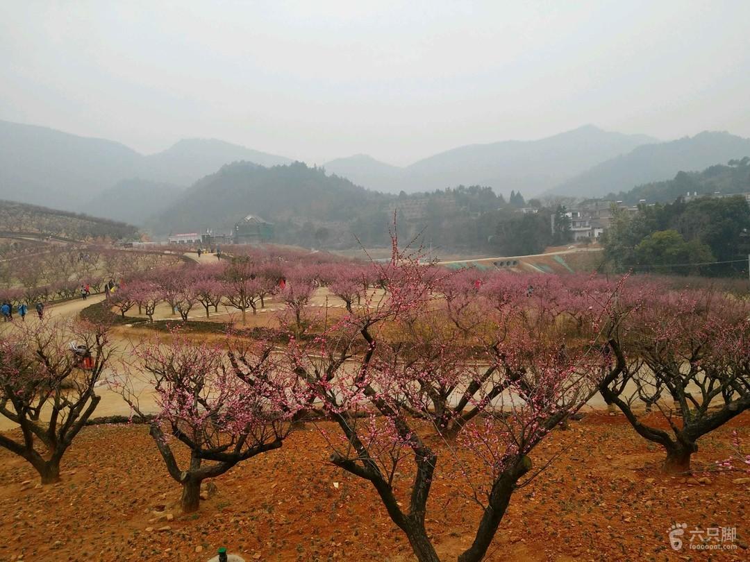 江西大余红梅园2018-02-10 自驾3