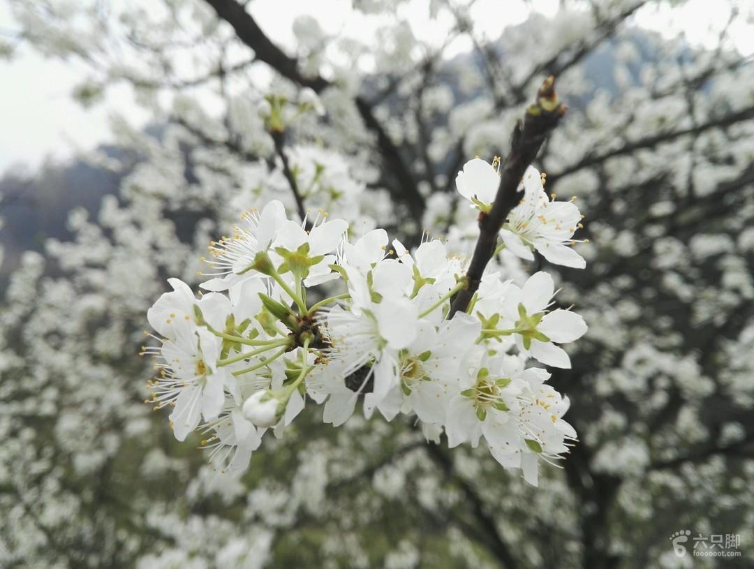 2018-03-11 成渝古驿道走马三界碑2