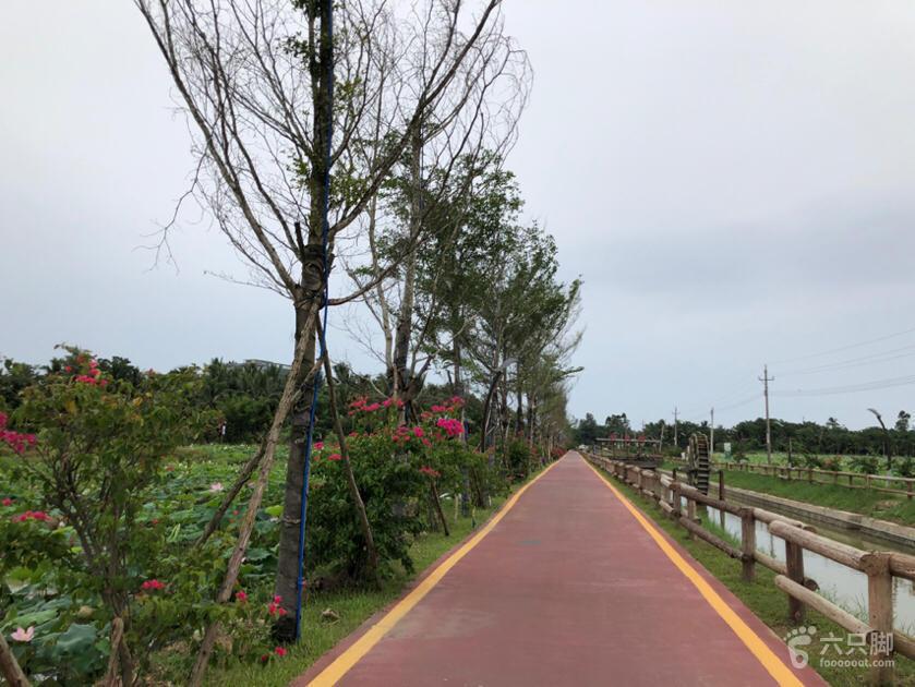 龙寿洋田野公园脚印-9