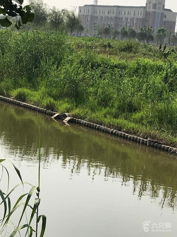海安中心河排污口脚印-9