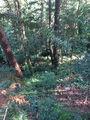 化粪池第一村位置