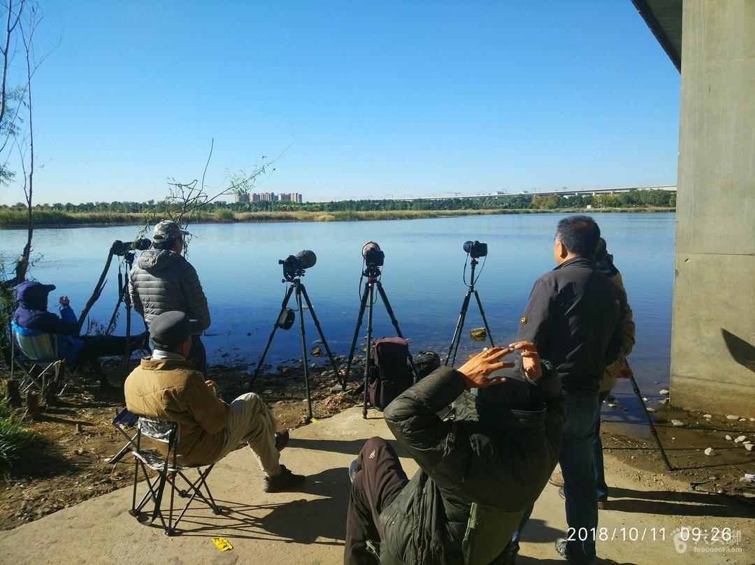 绿堤徒步拍摄鸟儿在水草间嬉戏23