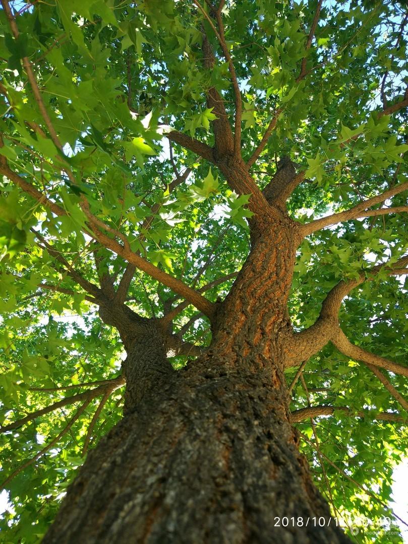 绿堤徒步绿绿的枫树3