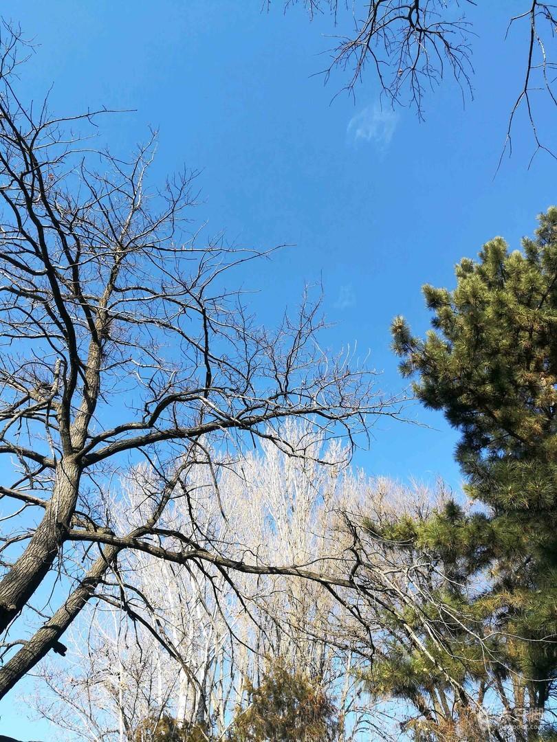 吉尔吉斯斯坦·比什凯克:植物园冬游2019-01-10 徒步1