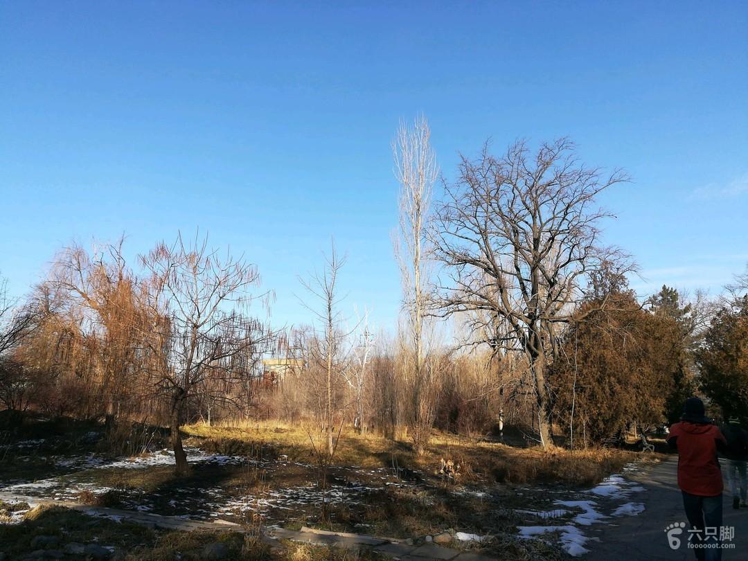 吉尔吉斯斯坦·比什凯克:植物园冬游2019-01-10 徒步2