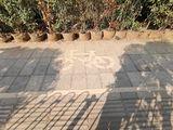 共享单车标线