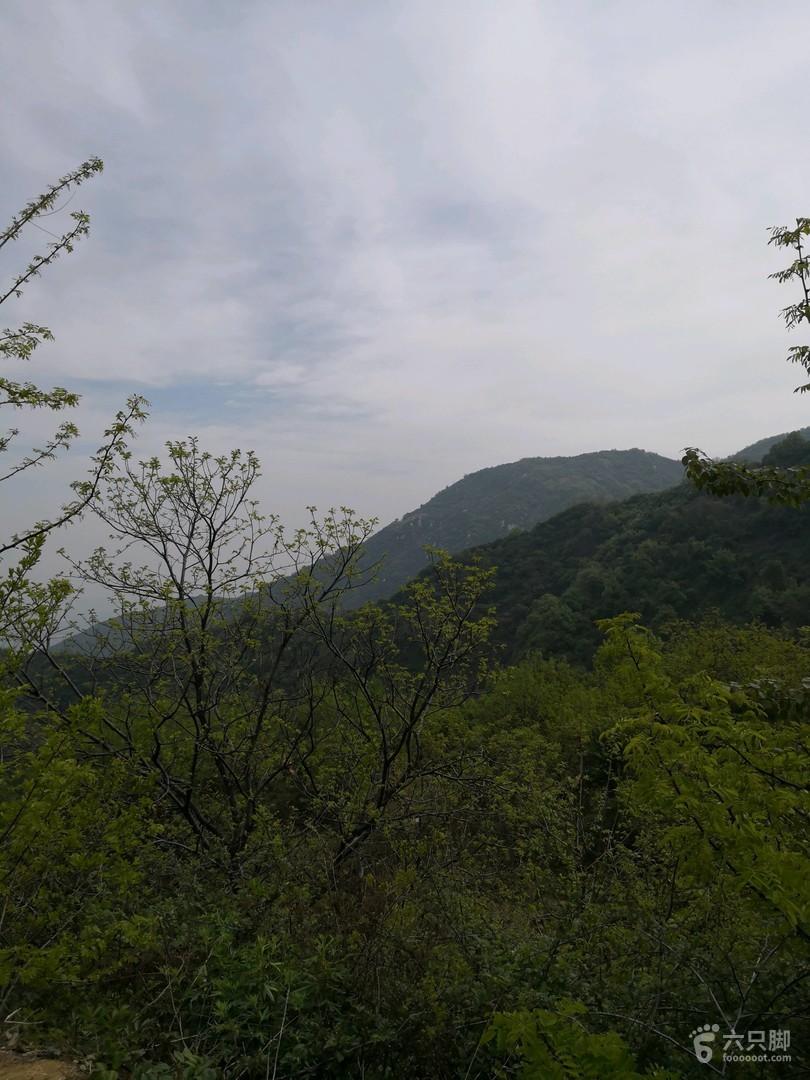 卧佛寺黄峪寺赏白鹃梅未命名