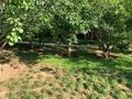 脚印-41在树丛中吹萨克斯(?)的老人