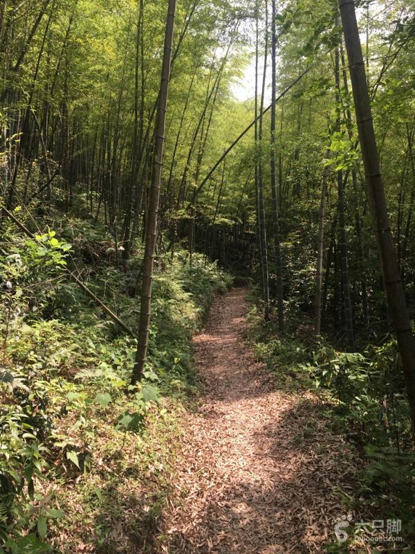 单人重装五指峰乡光菇山登顶齐云山穿越竹林