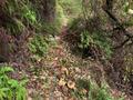 節點4(匯入主線):從下墈切入上坒主線,前行幾步即見嶺道石格