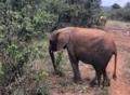 大象孤兒院
