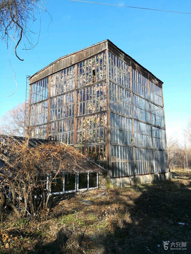 吉尔吉斯斯坦·比什凯克:植物园冬游2019-01-10 徒步3