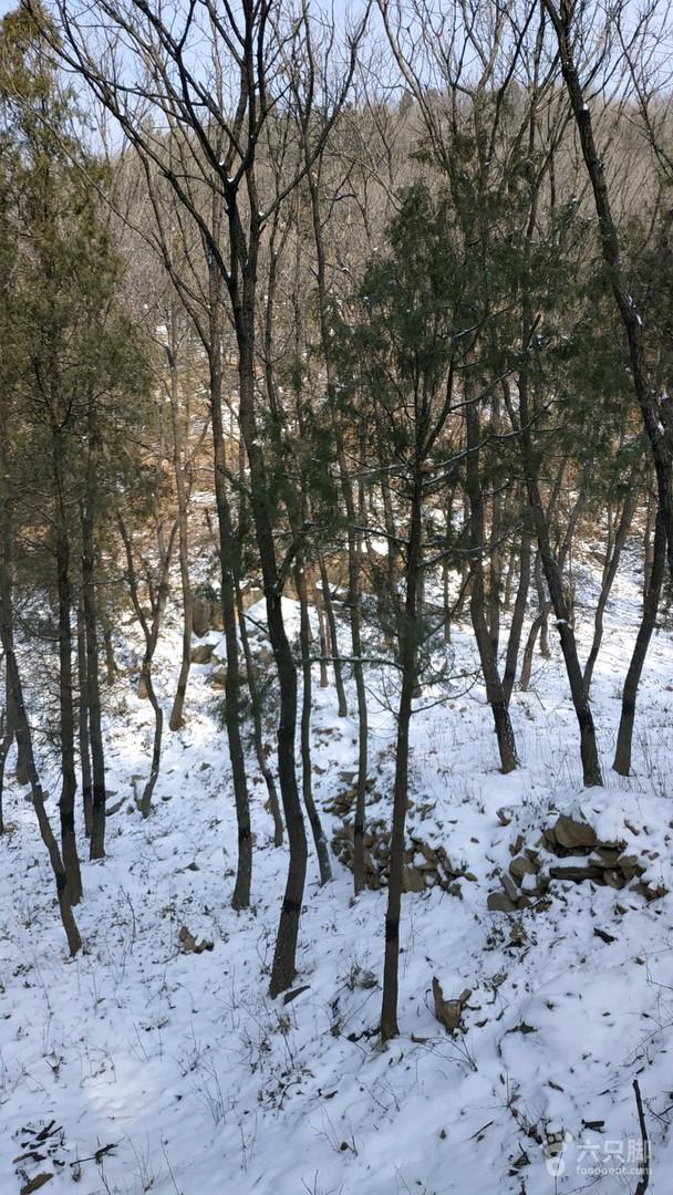 2019-01-10 雪后登嵩山峻极峰3