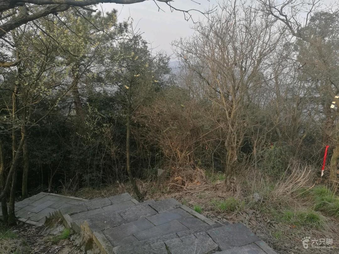 峰外峰·神犬哮天右侧是野路