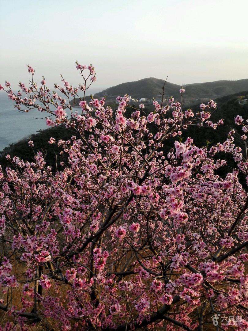 大连海之韵公园2019-04-18 登山2
