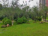 海棠树14,卫矛(之前认成日本女真)7,红叶石楠5,山茶2,沿路右边排排种一红叶石楠一山茶间距265,火棘3