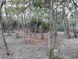 马厩后小树林