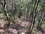 我上山没有跟着别人的路走,直接抓着树干往上爬,?#38477;?#30452;线最短