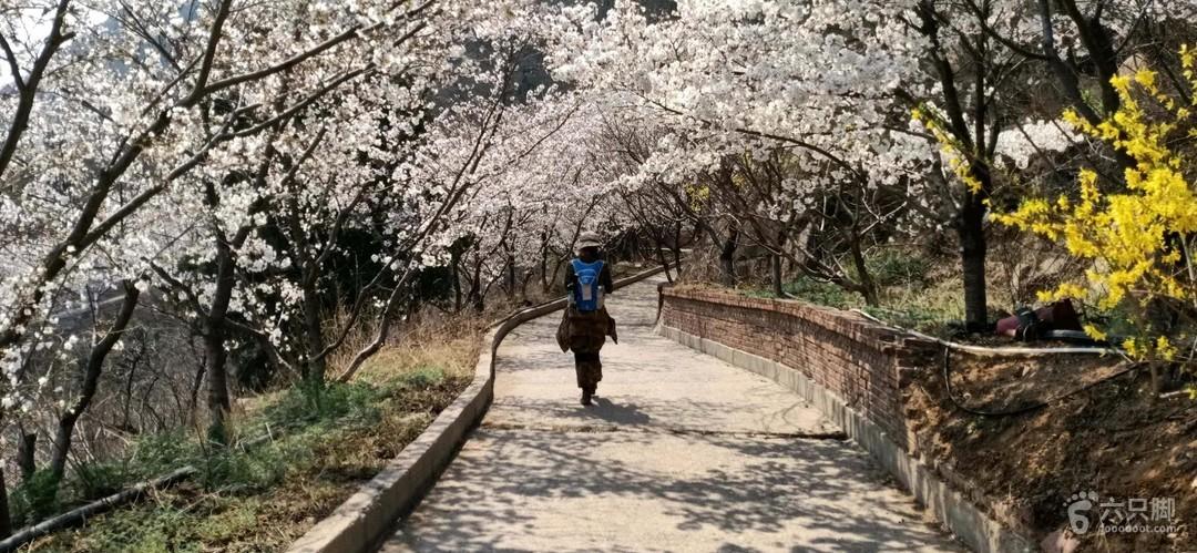 樱花南门--西域--磨合---披肩山-----樱花山3
